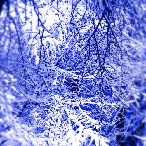 Free picture (Blue winter snowy forest landscape) from https://torange.biz/fx/white-landscape-effect-light-blur-123890